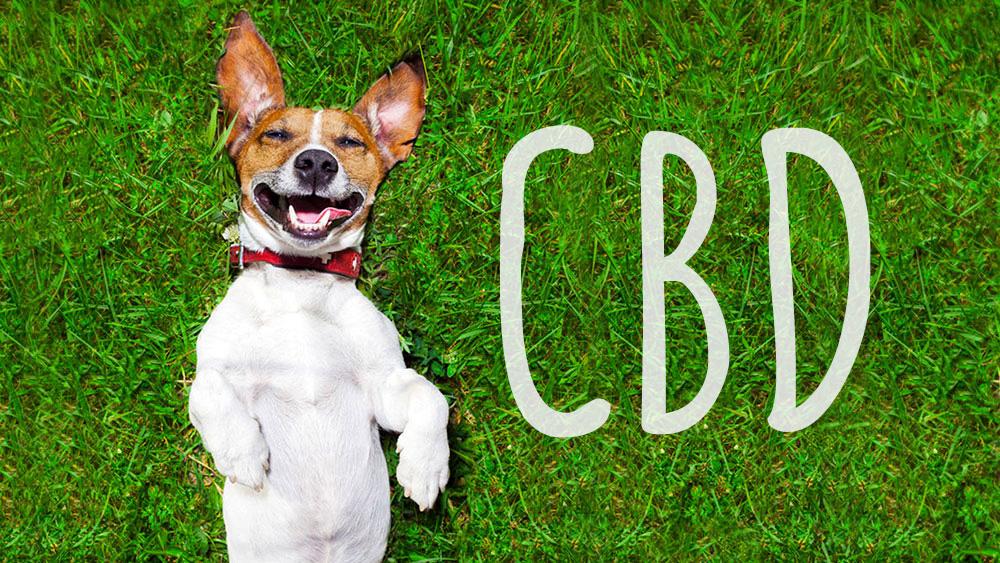 cbd per animali